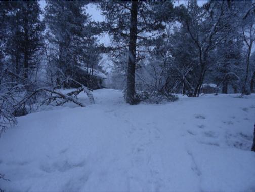 wildernishut
